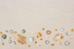 Seashells sulla sabbia Fondo di vacanze estive del mare con spazio per il testo immagini stock libere da diritti