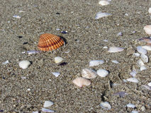 Seashells sulla sabbia Priorità bassa della spiaggia di estate Vista superiore fotografia stock