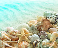 Seashells on the summer beach with sand royalty free stock photography