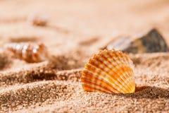 Seashells on the sunny beach Stock Photography