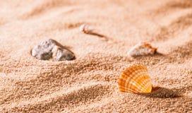 Seashells on the sunny beach Stock Photo