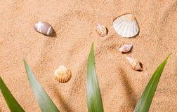 Seashells on the sunny beach Royalty Free Stock Photo