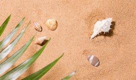 Seashells on the sunny beach Stock Photos