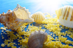 Seashells in the sunshine Stock Photography