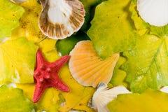 Seashells sur des lames images stock
