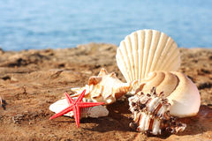Seashells sur la plage image stock