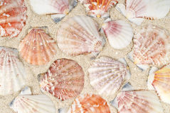 Seashells sur la plage photo stock