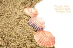 Seashells sur la plage photographie stock libre de droits