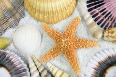 Seashells sur la plage image libre de droits
