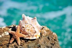 Seashells sur la roche photographie stock