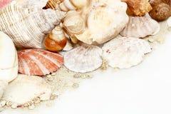 Seashells sur le blanc images libres de droits