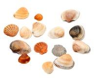Seashells sur le blanc Image libre de droits
