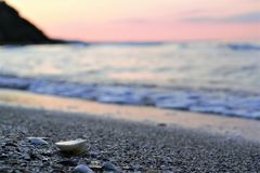 Seashells sur le bord de la mer photographie stock libre de droits