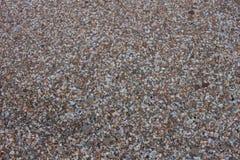 Seashells sur le bord de la mer photo stock
