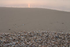 Seashells sur le bord de la mer Photos stock
