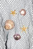 Seashells sur le filet de pêche photographie stock libre de droits