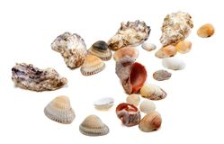 Seashells sur le fond blanc Photographie stock libre de droits