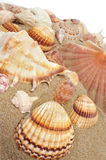Seashells sur le sable photos libres de droits