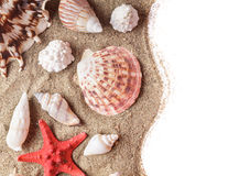 Seashells sur le sable photo stock