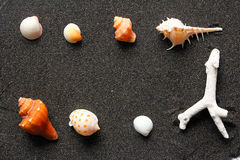 Seashells sur le sable photo libre de droits