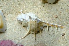 Seashells sur le sable blanc images libres de droits