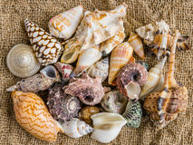 Seashells sur le sable d'une plage photos libres de droits