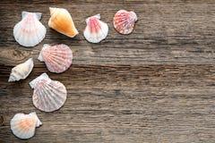 Seashells sur le vieux fond en bois superficiel par les agents de planches Photo libre de droits