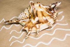 Seashells sur un papier fabriqué à la main Photos stock
