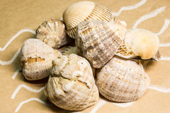 Seashells sur un papier fabriqué à la main Photographie stock libre de droits