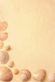 Seashells sur un papier fabriqué à la main Photographie stock