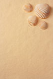 Seashells sur un papier fabriqué à la main photo stock