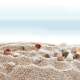 Seashells sur une plage photo stock