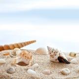 Seashells sur une plage image libre de droits