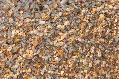 Seashells texture Stock Image