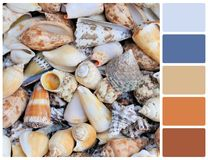 Seashells texture with palette color swatches Stock Photo