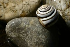Seashells and their appeal. stock photo