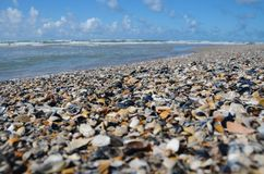 Seashells by the thousands royalty free stock images