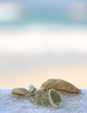 Seashells on the towels Royalty Free Stock Images