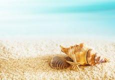 Seashells on a tropical seashore Stock Photo