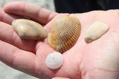 Seashells trzyma Zdjęcia Royalty Free