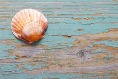 Seashells on a turquoise wooden background Stock Photography