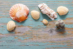 Seashells on a turquoise wooden background. Stock Images