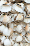 Seashells, a typical souvenir of the Black Sea Royalty Free Stock Image
