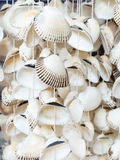 Seashells, a typical souvenir of the Black Sea Stock Image