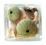 Seashells in un vaso isolato su priorità bassa bianca Fotografie Stock