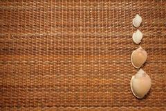 Seashells in una riga fotografia stock libera da diritti