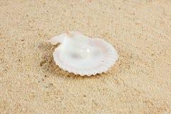 Seashells und pearl on sand holidays Stock Images