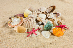 Seashells und rozgwiazda na piasek plaży pocztówce Obraz Stock