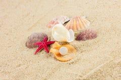 Seashells und rozgwiazda na piasek plaży pocztówce Obrazy Stock