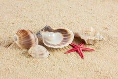 Seashells und rozgwiazda na piasek plaży pocztówce Fotografia Stock
